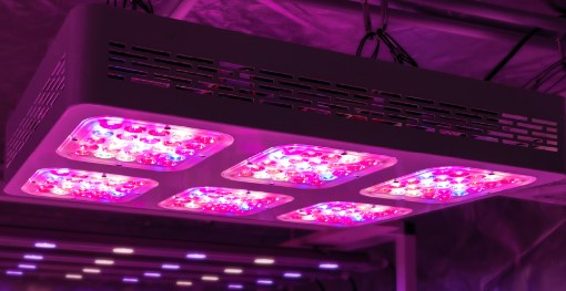 How to Pick the Best Grow Lamps for Your Home
